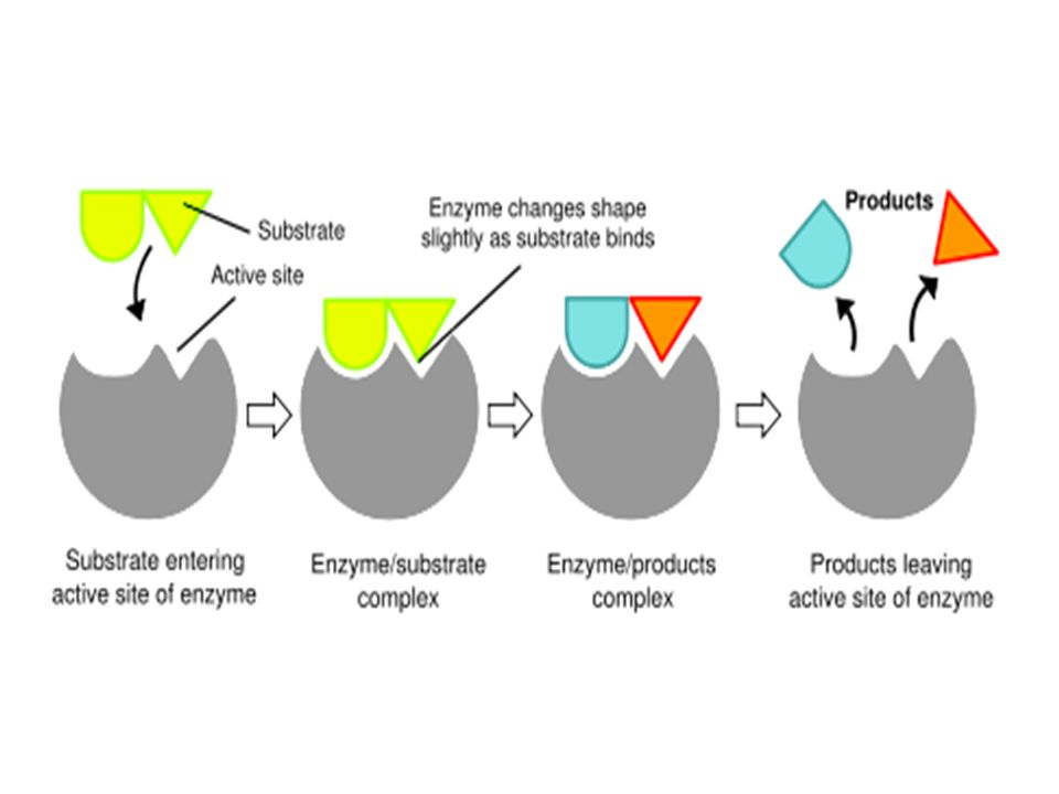 Classification of Enzymes Page 470 Classified into six types according to the reaction catalyzed