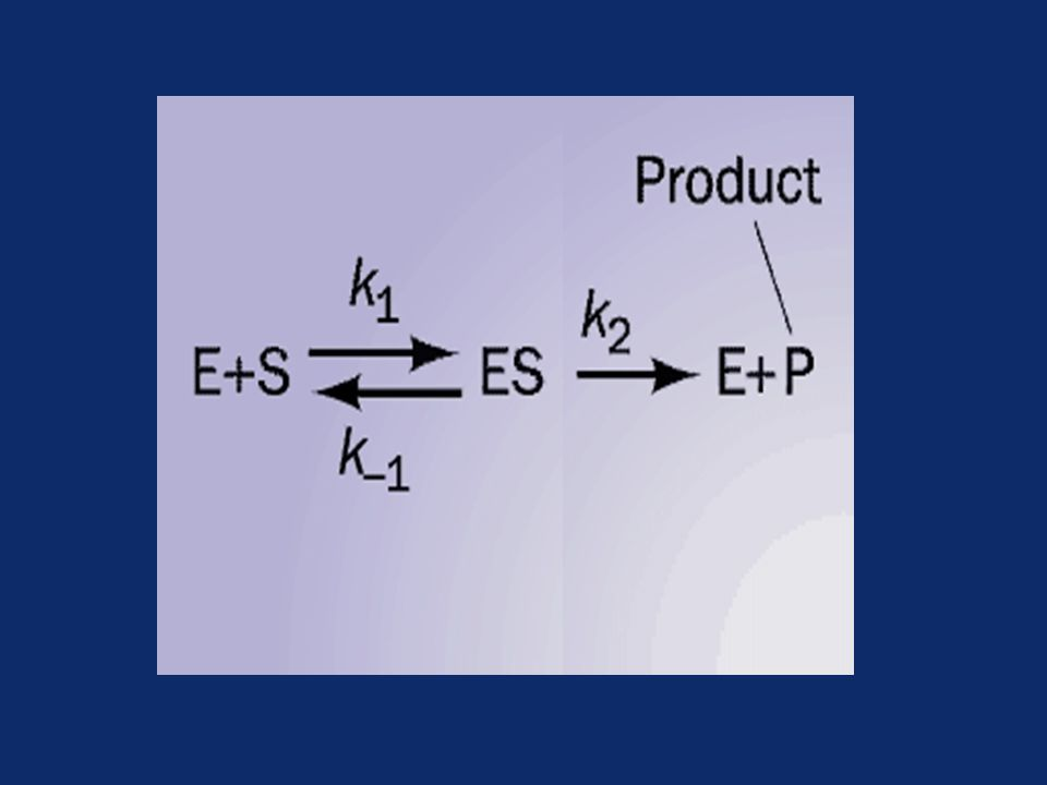 Initial rate of enzyme reaction Pre-steady state kinetics –When an enzyme is mixed with high concentration of substrate, there is an initial short period of time (a few hundred microseconds) during which intermediates leading to the formation of product gradually build up
