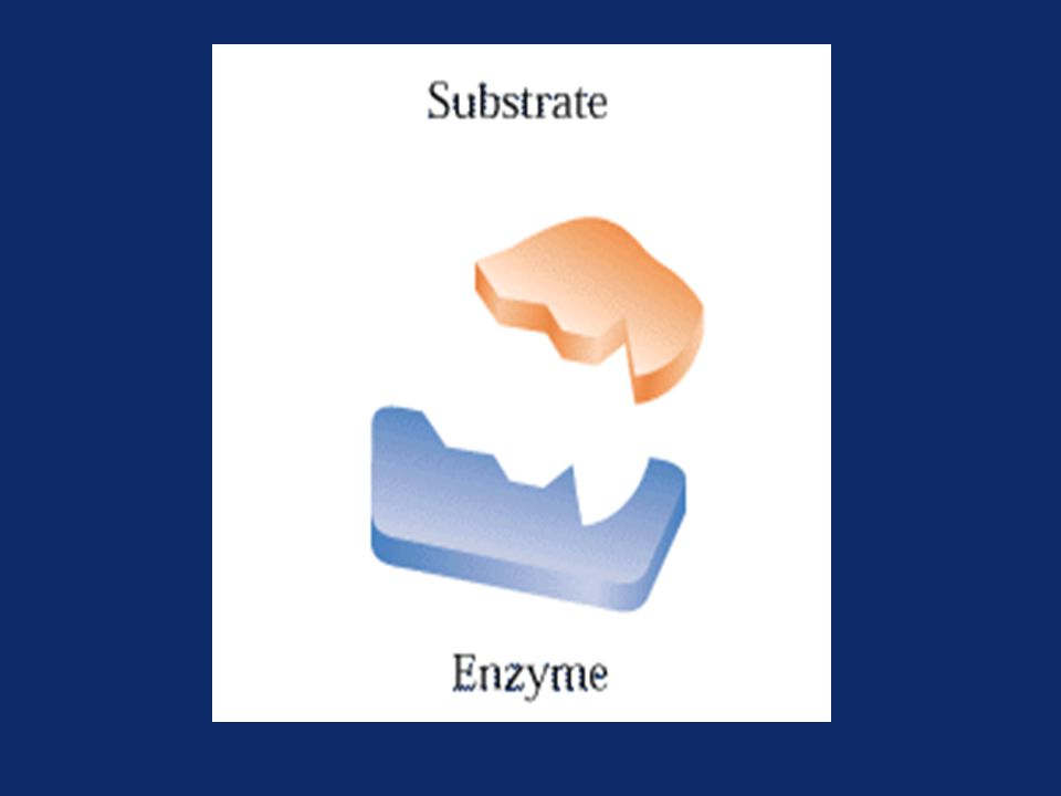 Properties of Enzymes Active site- –The region of enzyme that binds with the substrate and where catalysis occurs –All enzymes have one or more active sites Specificity- –Enzymes bind to their specific substrates in the active site to convert them to product(s) Regulation- –Enzymes can be activated or inhibited so that the rate of product formation responds to the need of the cell