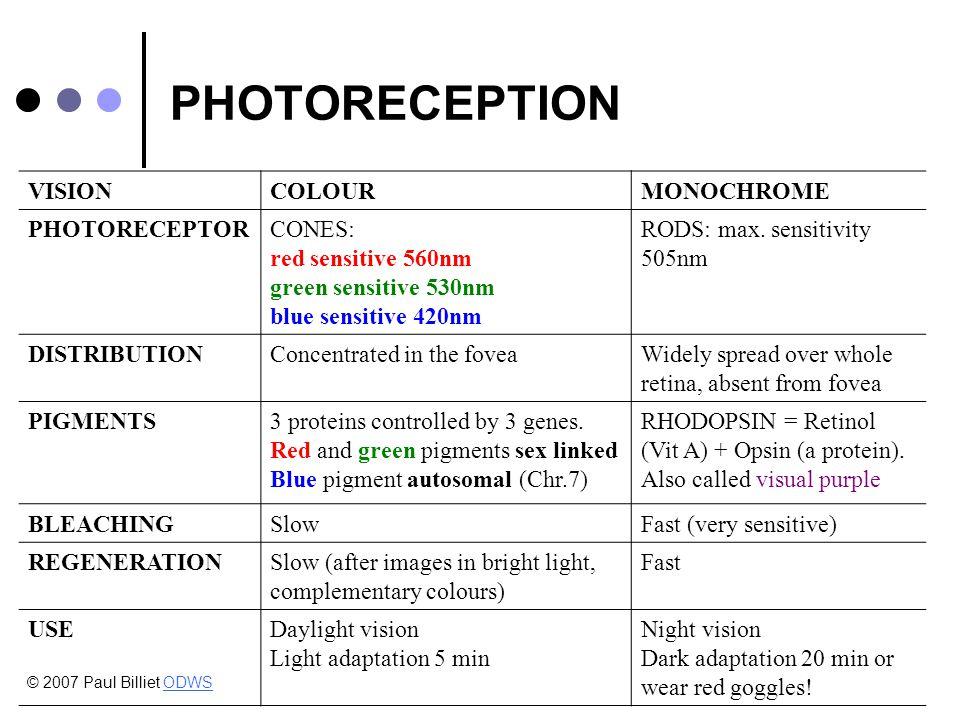 PHOTORECEPTION VISIONCOLOURMONOCHROME PHOTORECEPTORCONES: red sensitive 560nm green sensitive 530nm blue sensitive 420nm RODS: max.