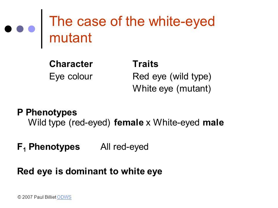 The case of the white-eyed mutant CharacterTraits Eye colourRed eye (wild type) White eye (mutant) P Phenotypes Wild type (red-eyed) female x White-eyed male F 1 Phenotypes All red-eyed Red eye is dominant to white eye © 2007 Paul Billiet ODWSODWS