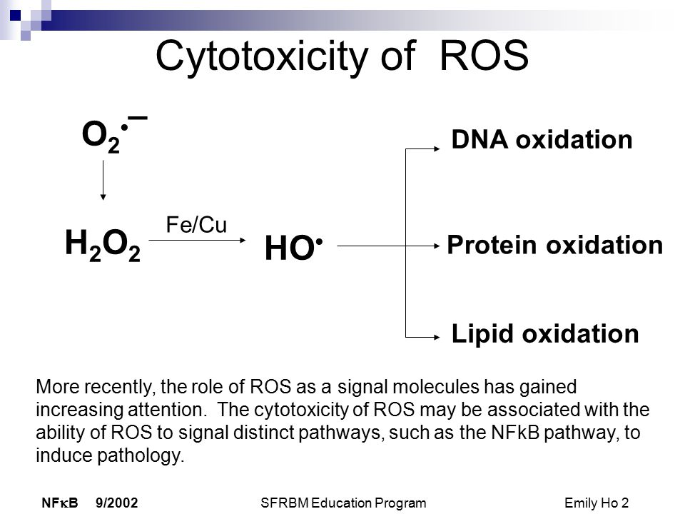 NF  B 9/2002 SFRBM Education Program Emily Ho 2 Cytotoxicity of ROS O 2 ¯ H2O2H2O2 HO DNA oxidation Protein oxidation Lipid oxidation Fe/Cu More recently, the role of ROS as a signal molecules has gained increasing attention.