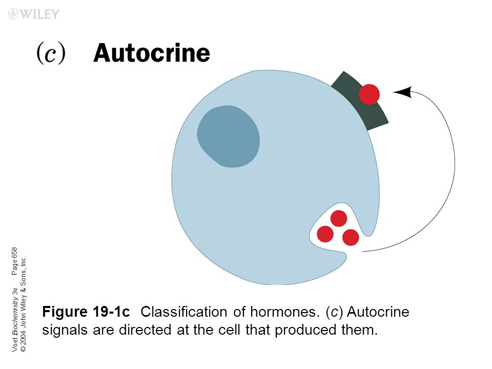 Voet Biochemistry 3e © 2004 John Wiley & Sons, Inc. Figure 19-1cClassification of hormones. (c) Autocrine signals are directed at the cell that produc