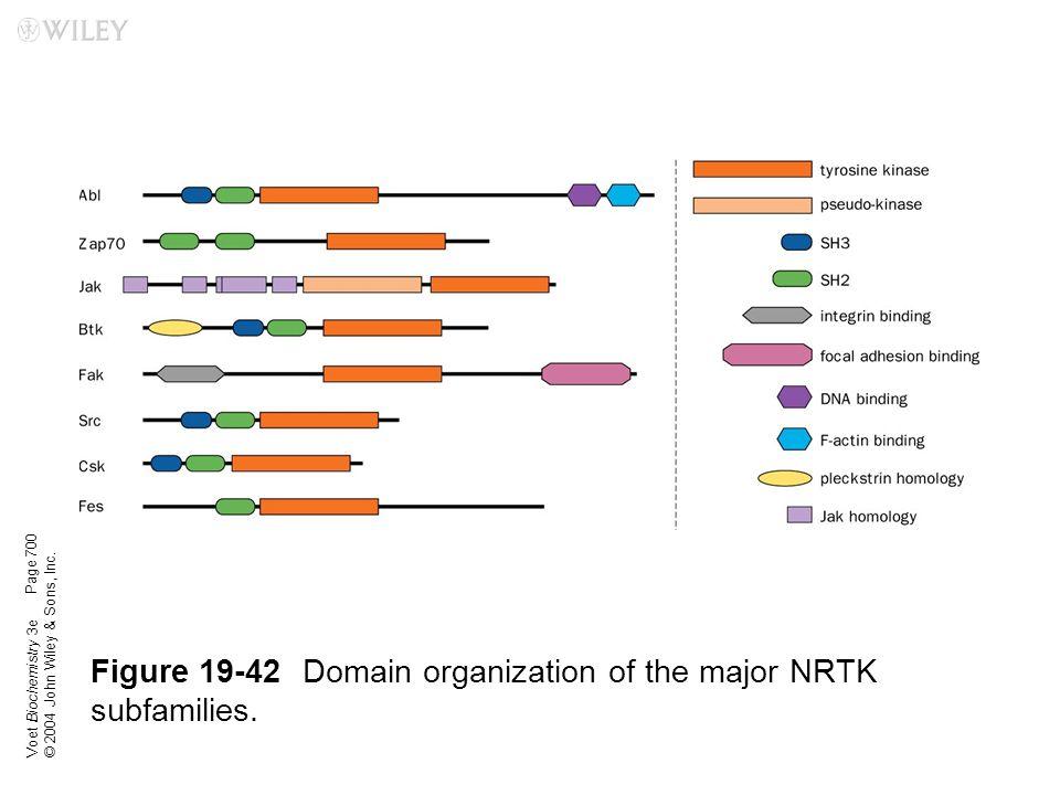 Voet Biochemistry 3e © 2004 John Wiley & Sons, Inc. Figure 19-42Domain organization of the major NRTK subfamilies. Page 700