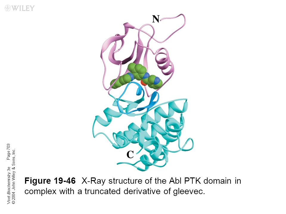 Voet Biochemistry 3e © 2004 John Wiley & Sons, Inc. Figure 19-46X-Ray structure of the Abl PTK domain in complex with a truncated derivative of gleeve