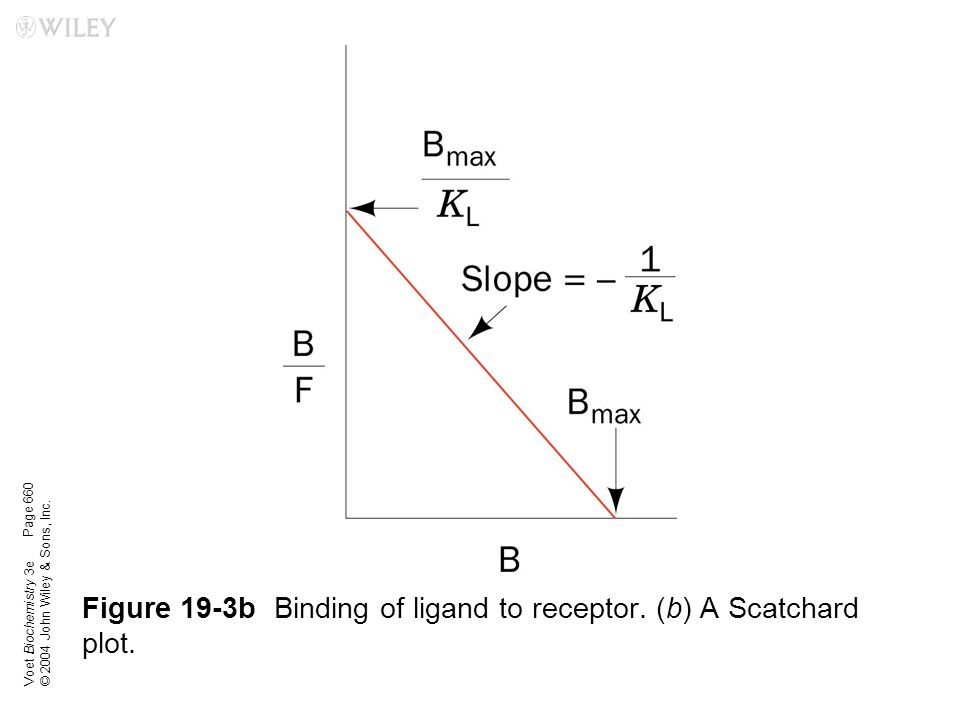 Voet Biochemistry 3e © 2004 John Wiley & Sons, Inc. Figure 19-3bBinding of ligand to receptor. (b) A Scatchard plot. Page 660