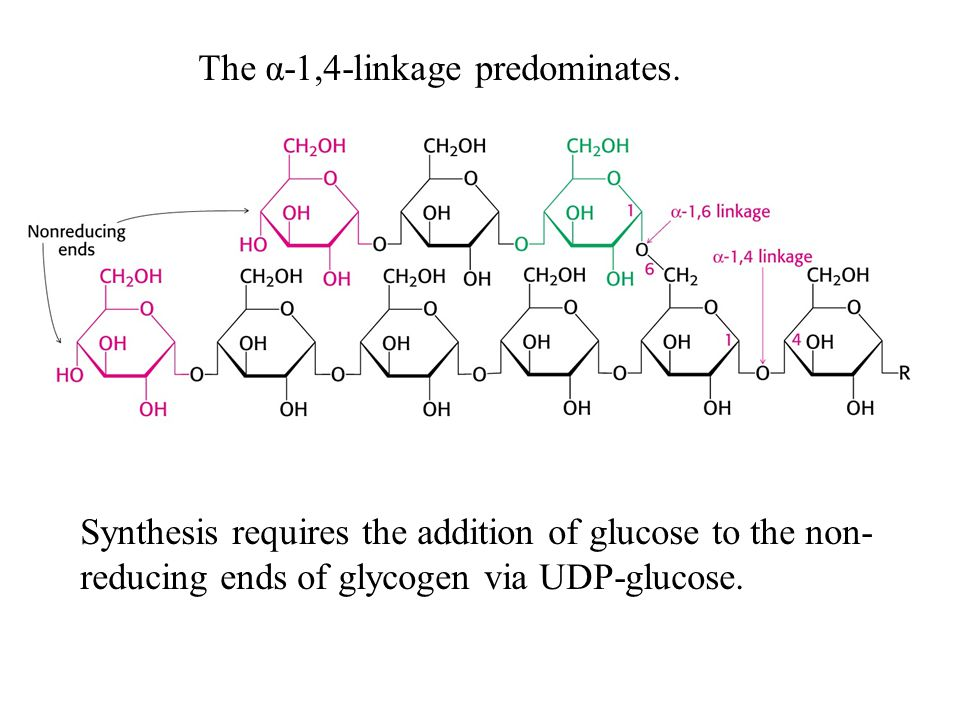 Glycogen phosphorylase catalyzes the breakdown of glycogen.