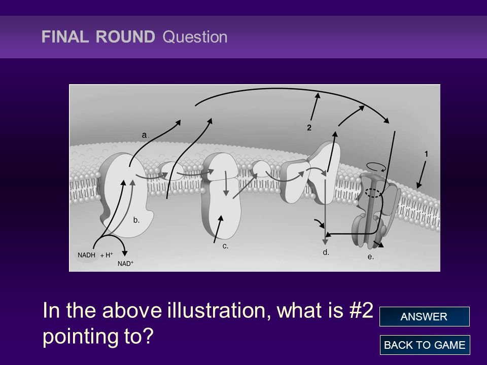FINAL ROUND Question In the above illustration, what is #2 pointing to BACK TO GAME ANSWER