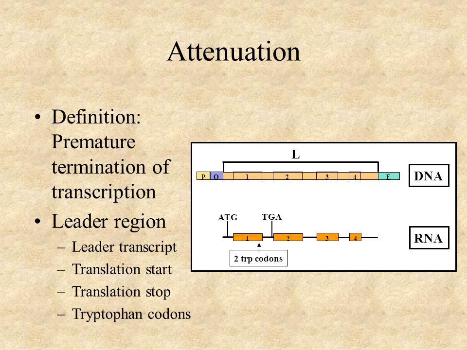 Attenuation Definition: Premature termination of transcription PO E 43 2 1 L DNA RNA ATG TGA 2 trp codons 1 43 2 Leader region –Leader transcript –Translation start –Translation stop –Tryptophan codons