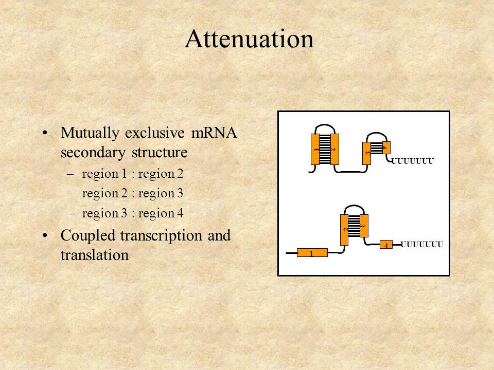 1 4 3 2 UUUUUUU 1 4 3 2 Attenuation Mutually exclusive mRNA secondary structure –region 1 : region 2 –region 2 : region 3 –region 3 : region 4 Coupled transcription and translation