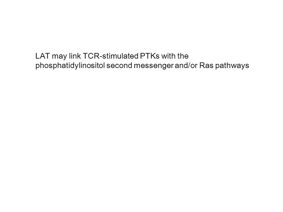 LAT may link TCR-stimulated PTKs with the phosphatidylinositol second messenger and/or Ras pathways