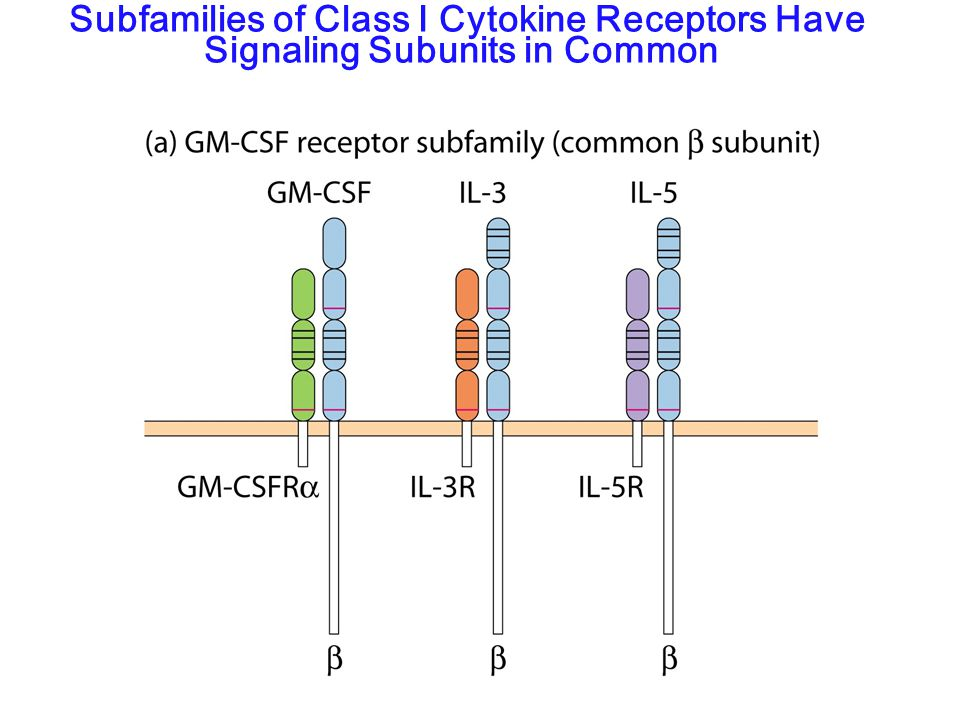 Subfamilies of Class I Cytokine Receptors Have Signaling Subunits in Common