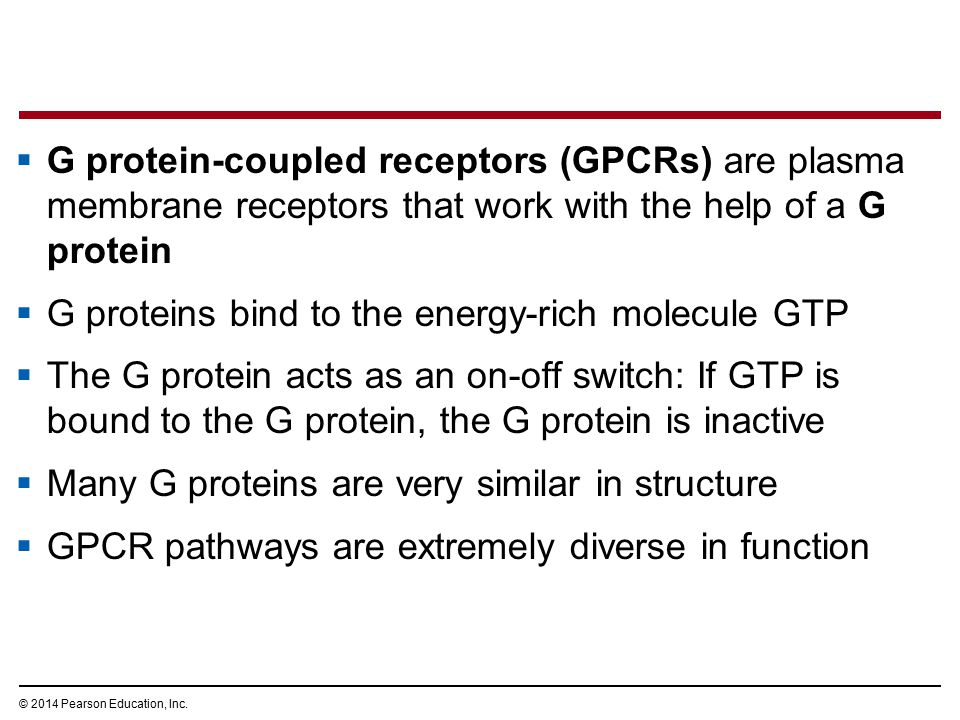  G protein-coupled receptors (GPCRs) are plasma membrane receptors that work with the help of a G protein  G proteins bind to the energy-rich molecu