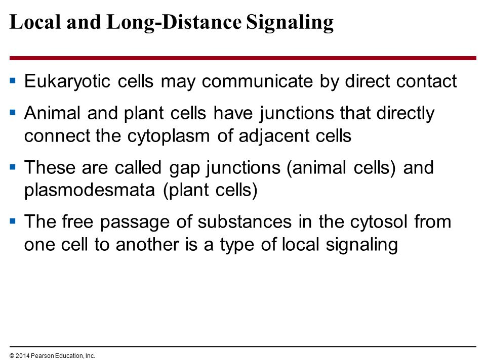 Local and Long-Distance Signaling  Eukaryotic cells may communicate by direct contact  Animal and plant cells have junctions that directly connect t