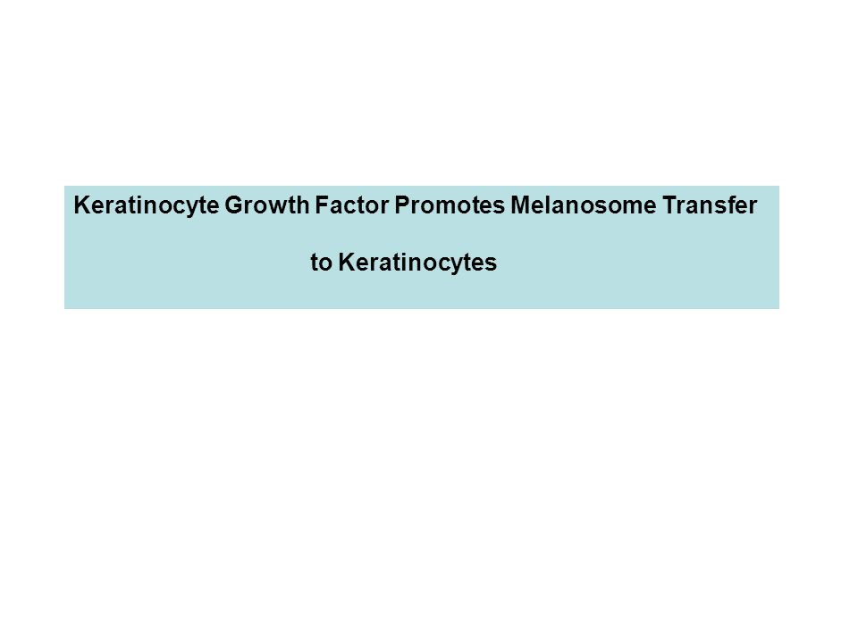 Keratinocyte Growth Factor Promotes Melanosome Transfer to Keratinocytes
