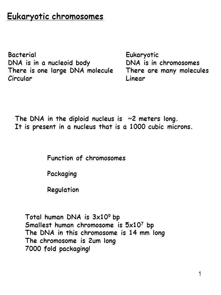 1 Eukaryotic chromosomes BacterialEukaryotic DNA is in a nucleoid bodyDNA is in chromosomes There is one large DNA moleculeThere are many molecules Ci