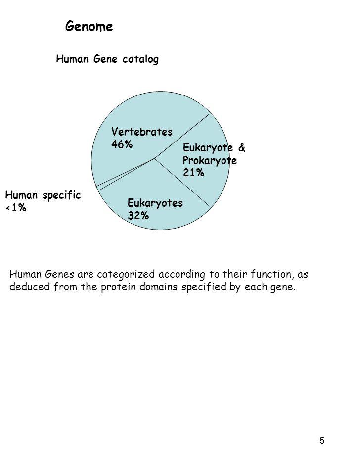 5 Genome Vertebrates 46% Eukaryote & Prokaryote 21% Eukaryotes 32% Human specific <1% Human Gene catalog Human Genes are categorized according to thei