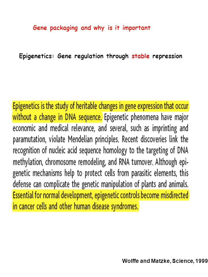 Epigenetic mechanism #1: DNA methylation DNA methylation has long been correlated with repression of gene expression DNA methylation mostly occurs on CpG dinucleotides methyl group added to the cytosine DNMTs methylation status is maintained during replication/mitosis