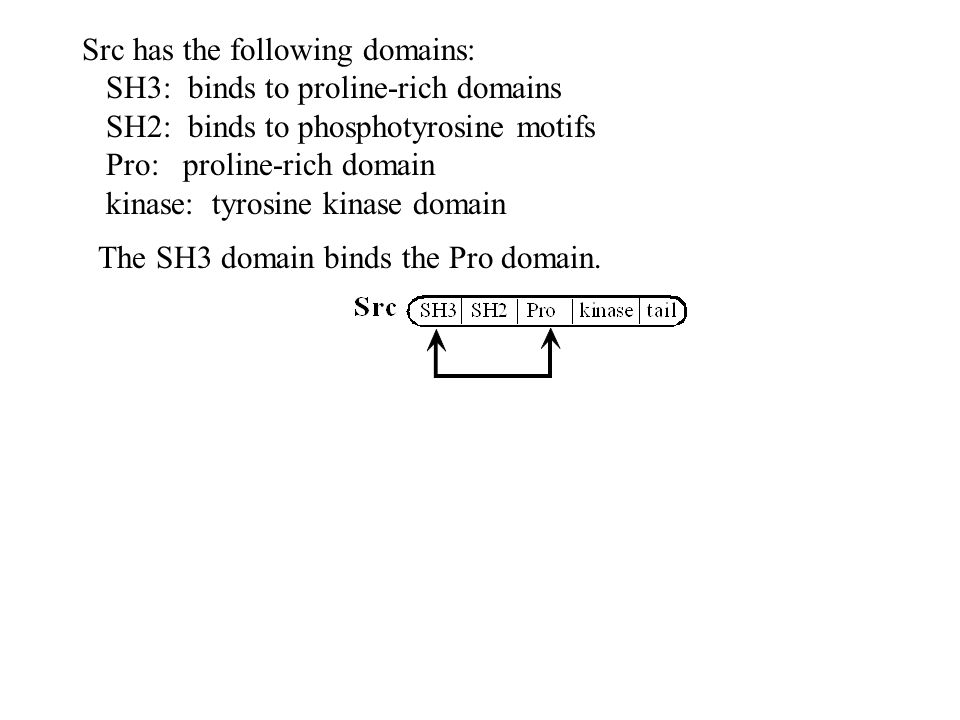 Pro domain of p85 competes with Pro of Src for binding to SH3 of Src If binding is to p85, then this inhibition is relieved