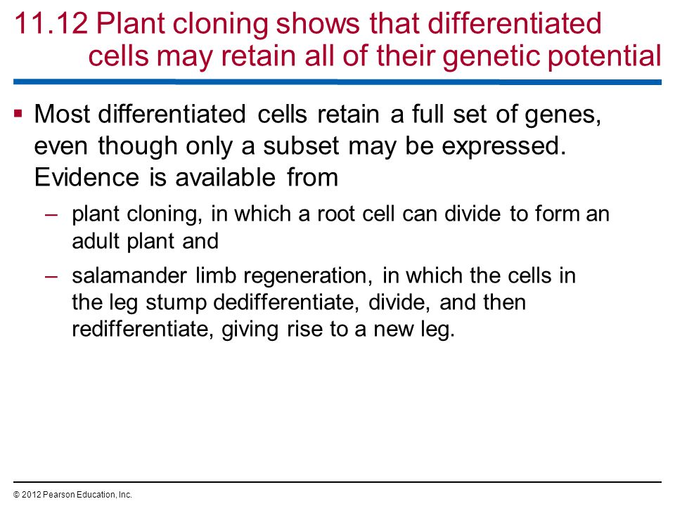 11.12 Plant cloning shows that differentiated cells may retain all of their genetic potential  Most differentiated cells retain a full set of genes, even though only a subset may be expressed.