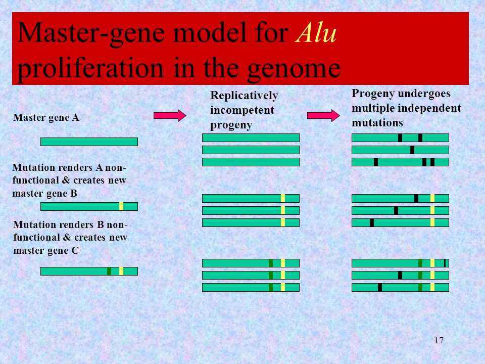 17 Master-gene model for Alu proliferation in the genome Master gene A Replicatively incompetent progeny Progeny undergoes multiple independent mutations Mutation renders A non- functional & creates new master gene B Mutation renders B non- functional & creates new master gene C