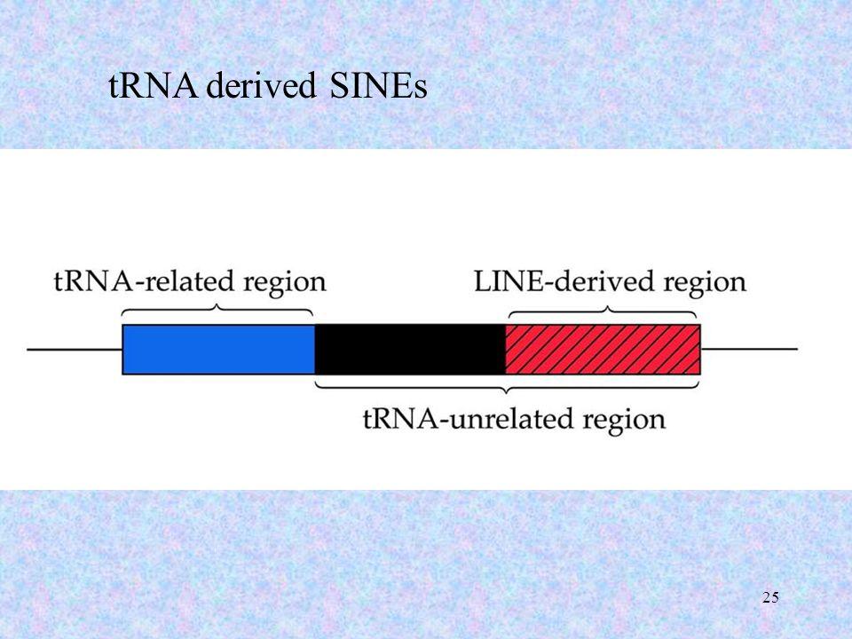 25 tRNA derived SINEs
