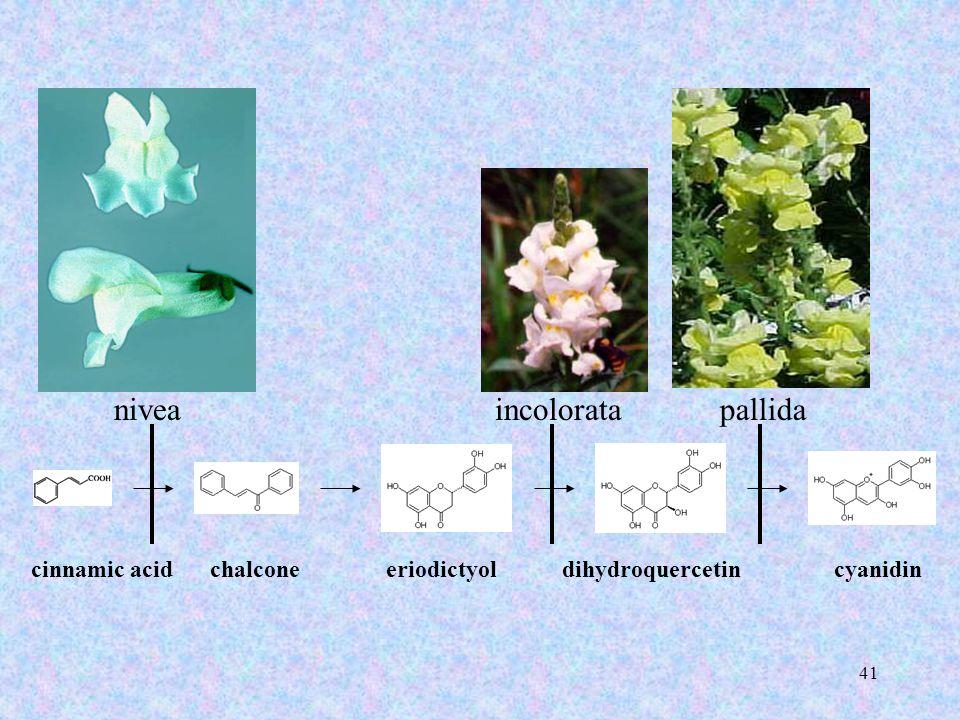 41 cinnamic acidchalconeeriodictyoldihydroquercetincyanidin niveaincoloratapallida