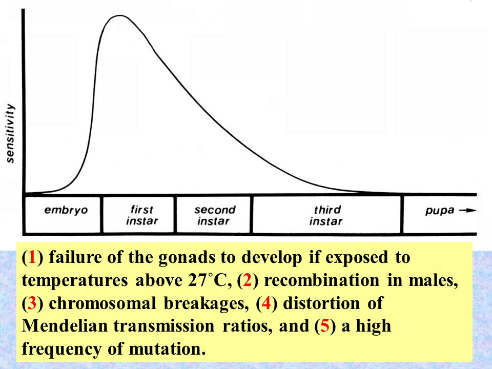 55 (1) failure of the gonads to develop if exposed to temperatures above 27˚C, (2) recombination in males, (3) chromosomal breakages, (4) distortion of Mendelian transmission ratios, and (5) a high frequency of mutation.
