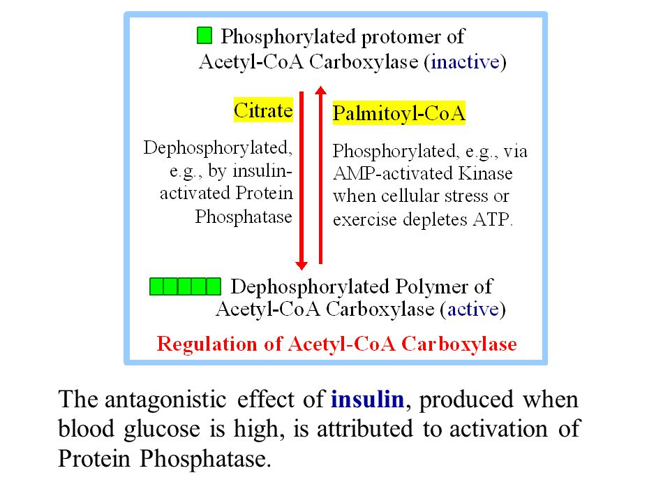 The antagonistic effect of insulin, produced when blood glucose is high, is attributed to activation of Protein Phosphatase.