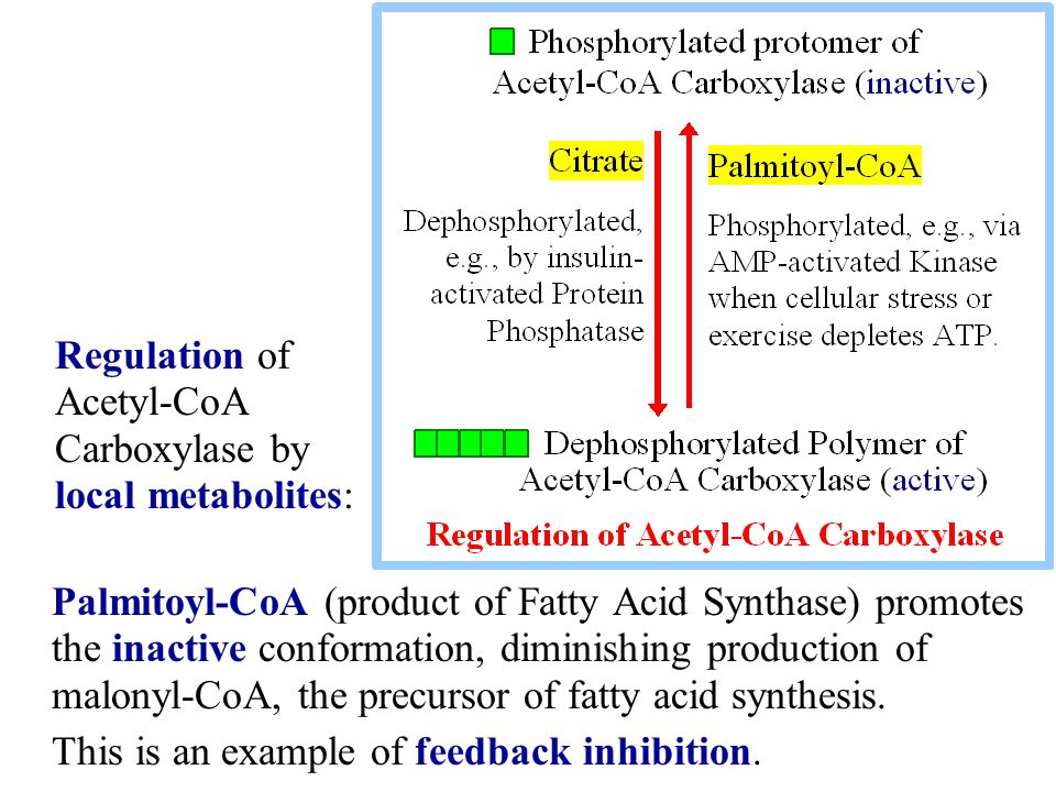Palmitoyl-CoA (product of Fatty Acid Synthase) promotes the inactive conformation, diminishing production of malonyl-CoA, the precursor of fatty acid
