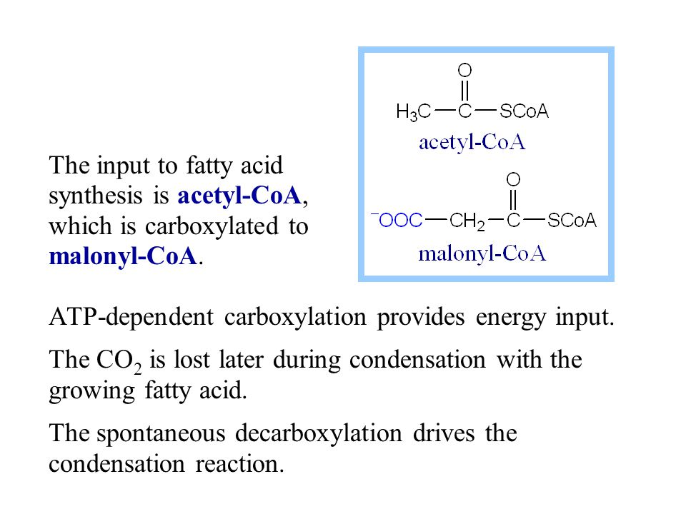 ATP-dependent carboxylation provides energy input. The CO 2 is lost later during condensation with the growing fatty acid. The spontaneous decarboxyla