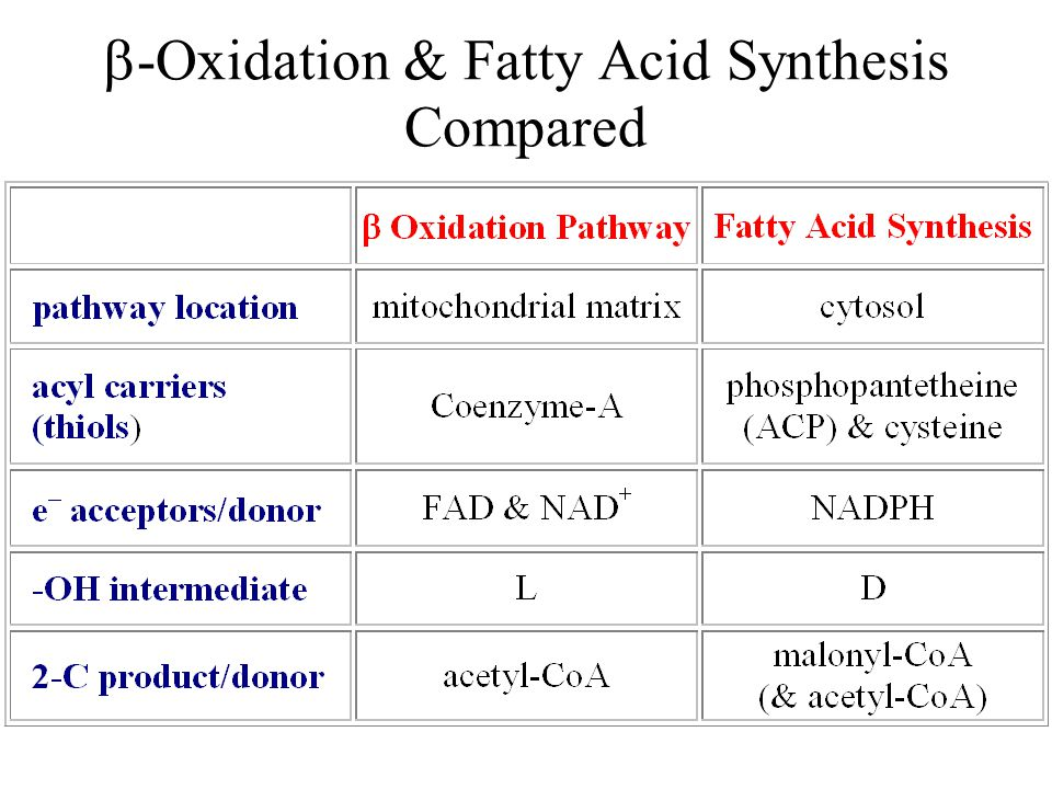  -Oxidation & Fatty Acid Synthesis Compared