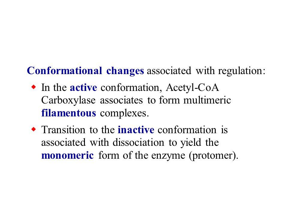 AMP functions as an energy sensor and regulator of metabolism.