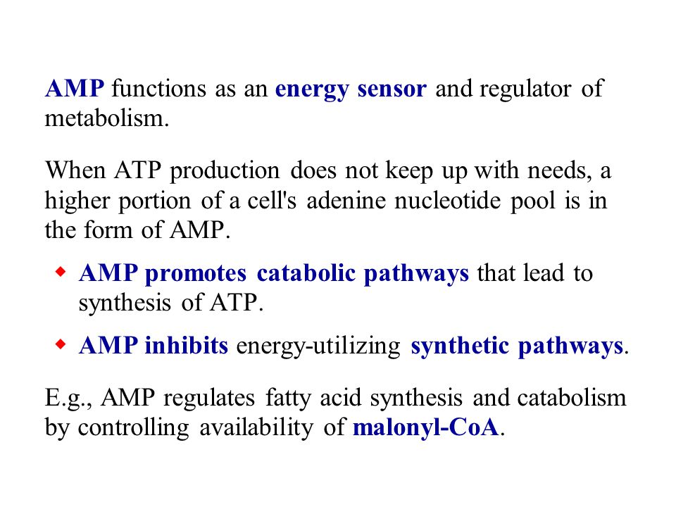  Fatty acid synthesis is diminished by lack of the substrate malonyl-CoA.
