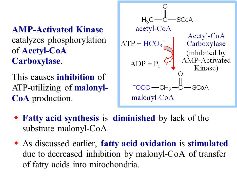 Following transfer of the growing fatty acid from phosphopantetheine to the Condensing Enzyme s cysteine sulfhydryl, the cycle begins again, with another malonyl-CoA.