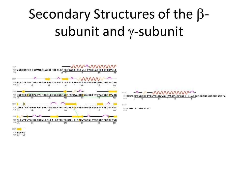 Secondary Structures of the  - subunit and  -subunit