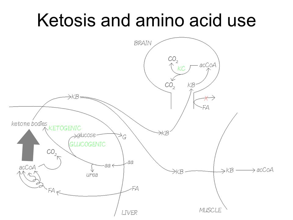 Ketosis and amino acid use