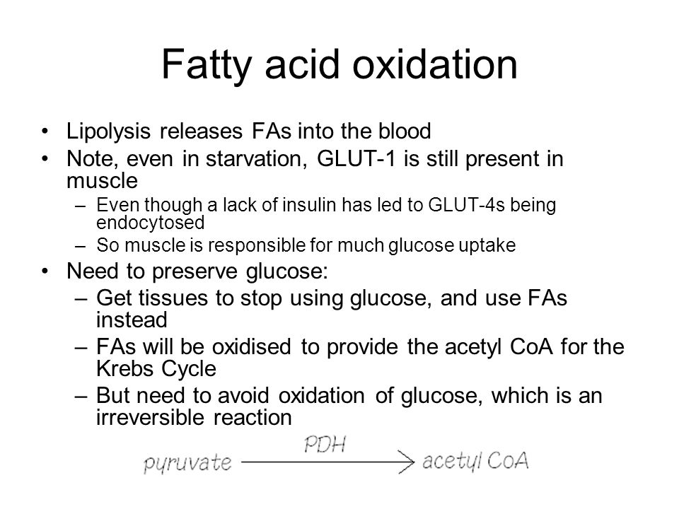 Fatty acid oxidation Lipolysis releases FAs into the blood Note, even in starvation, GLUT-1 is still present in muscle –Even though a lack of insulin has led to GLUT-4s being endocytosed –So muscle is responsible for much glucose uptake Need to preserve glucose: –Get tissues to stop using glucose, and use FAs instead –FAs will be oxidised to provide the acetyl CoA for the Krebs Cycle –But need to avoid oxidation of glucose, which is an irreversible reaction