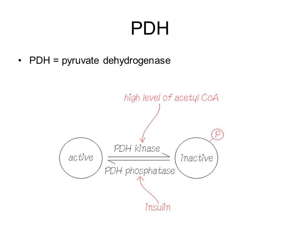 PDH PDH = pyruvate dehydrogenase