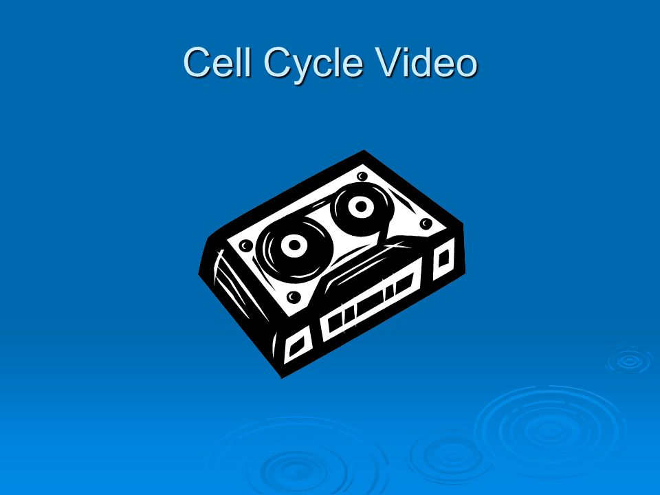 Cell Cycle Video