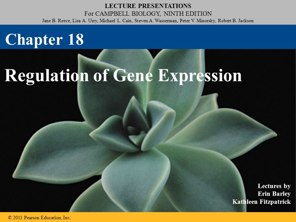 Concept 18.5: Cancer results from genetic changes that affect cell cycle control The gene regulation systems that go wrong during cancer are the very same systems involved in embryonic development © 2011 Pearson Education, Inc.