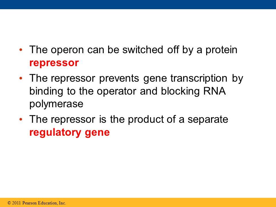 Figure 18.8-3 Enhancer (distal control elements) DNA Upstream Promoter Proximal control elements Transcription start site Exon IntronExon Intron Poly-A signal sequence Transcription termination region Downstream Poly-A signal Exon IntronExon Intron Transcription Cleaved 3 end of primary transcript 5 Primary RNA transcript (pre-mRNA) Intron RNA RNA processing mRNA Coding segment 5 Cap 5 UTR Start codon Stop codon 3 UTR 3 Poly-A tail P PPG AAA  AAA