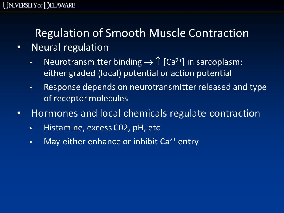 Regulation of Smooth Muscle Contraction Neural regulation Neurotransmitter binding   [Ca 2+ ] in sarcoplasm; either graded (local) potential or action potential Response depends on neurotransmitter released and type of receptor molecules Hormones and local chemicals regulate contraction Histamine, excess C02, pH, etc May either enhance or inhibit Ca 2+ entry