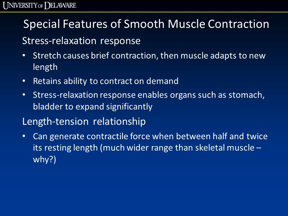 Special Features of Smooth Muscle Contraction Stress-relaxation response Stretch causes brief contraction, then muscle adapts to new length Retains ability to contract on demand Stress-relaxation response enables organs such as stomach, bladder to expand significantly Length-tension relationship Can generate contractile force when between half and twice its resting length (much wider range than skeletal muscle – why )
