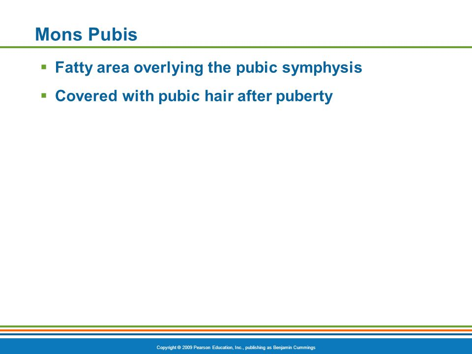 Copyright © 2009 Pearson Education, Inc., publishing as Benjamin Cummings Mons Pubis  Fatty area overlying the pubic symphysis  Covered with pubic hair after puberty