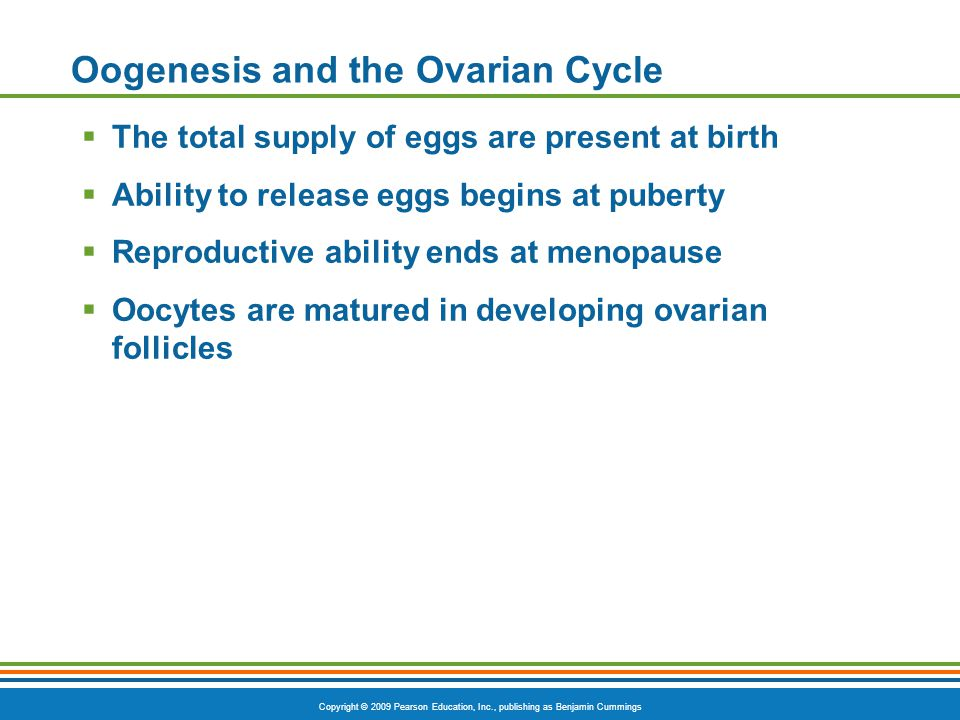 Copyright © 2009 Pearson Education, Inc., publishing as Benjamin Cummings Oogenesis and the Ovarian Cycle  The total supply of eggs are present at birth  Ability to release eggs begins at puberty  Reproductive ability ends at menopause  Oocytes are matured in developing ovarian follicles
