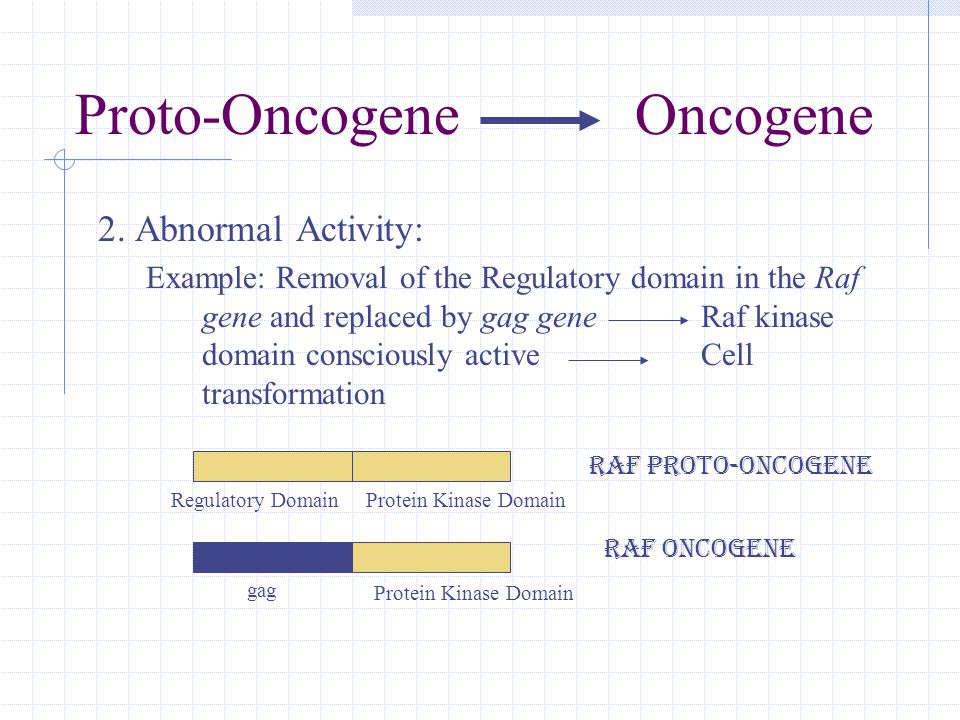 2. Abnormal Activity: Example: Removal of the Regulatory domain in the Raf gene and replaced by gag gene Raf kinase domain consciously active Cell tra