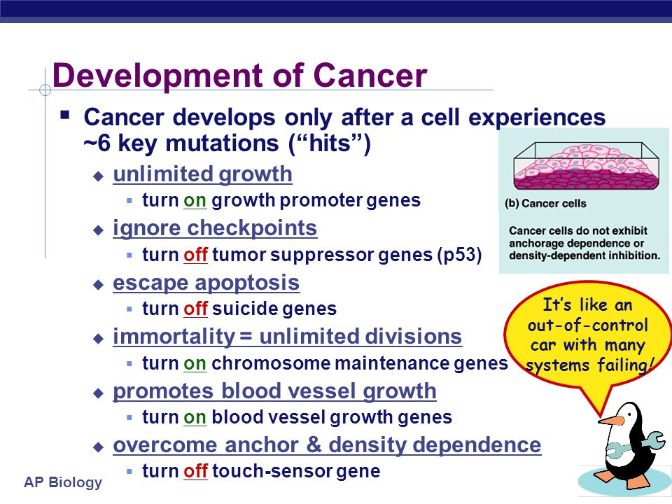 AP Biology Cancer & Cell Growth  Cancer is essentially a failure of cell division control  unrestrained, uncontrolled cell growth  What control is lost.