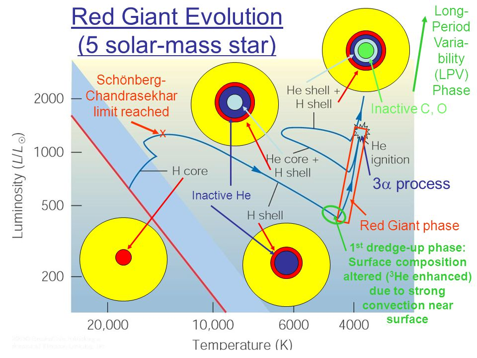 Red Giant Evolution (5 solar-mass star) Inactive He Inactive C, O Schönberg- Chandrasekhar limit reached x 3  process Red Giant phase 1 st dredge-up phase: Surface composition altered ( 3 He enhanced) due to strong convection near surface Long- Period Varia- bility (LPV) Phase