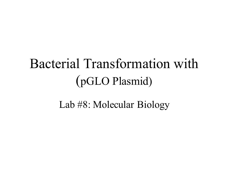 Bacterial Transformation with ( pGLO Plasmid) Lab #8: Molecular Biology